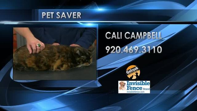 Pet Saver: Cali Campbell