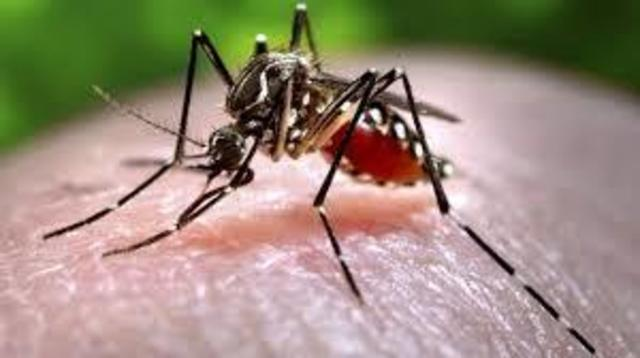 MA health officials report year's 1st human case of West Nile Virus