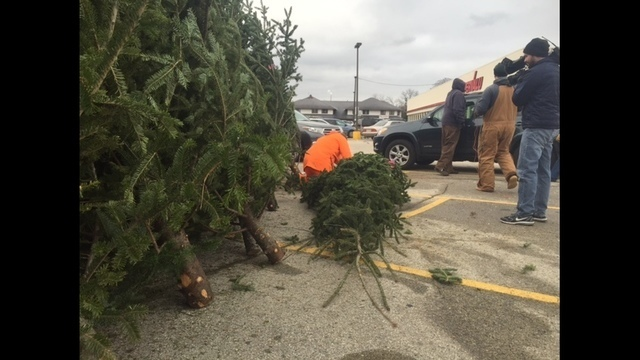 White House Christmas Tree to be selected from Shawano tree farm