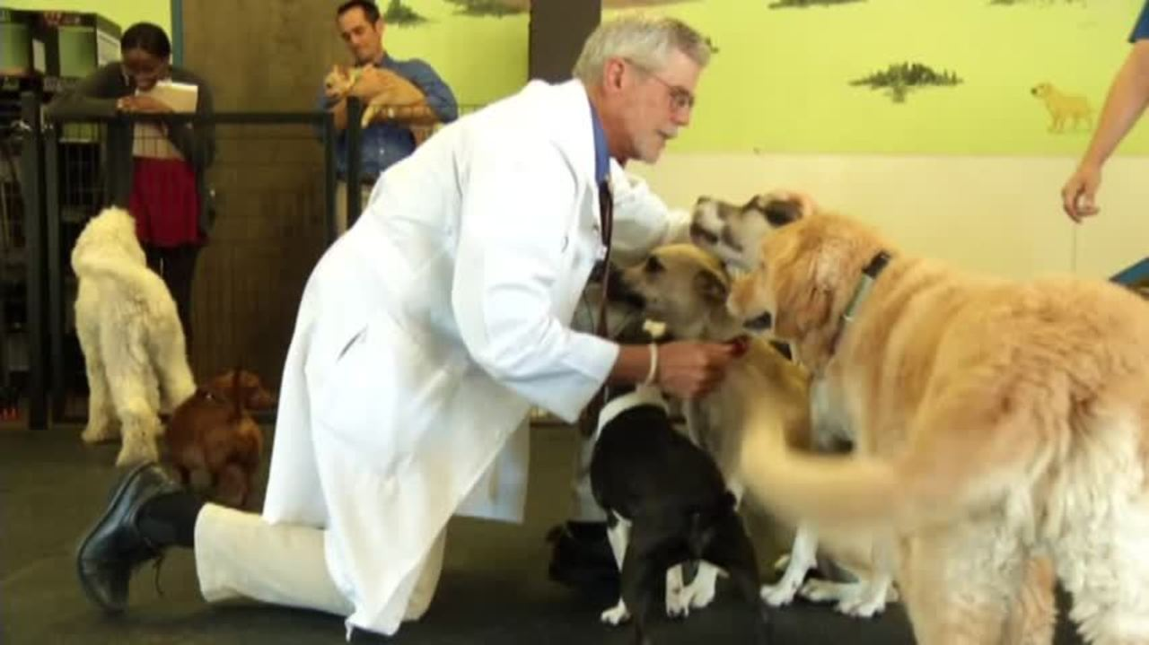 Watch Can Pets Make You Sick video
